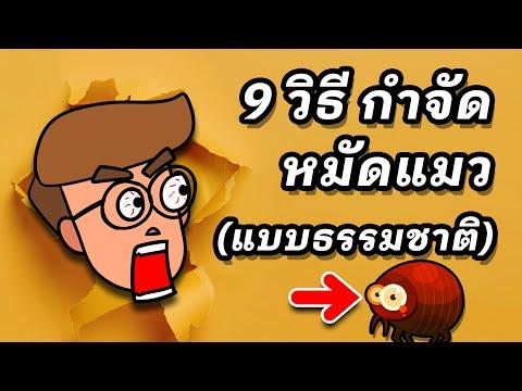 9 วิธีกำจัดหมัดแมวแบบธรรมชาติ (ง่ายๆ ทำได้เลย)