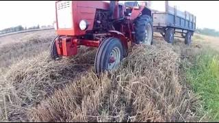 Żniwa 2016 - Łubin, pszenica, owies | 2x T25 , Claas | sj 7000 |