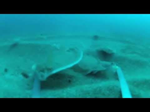 Fishing for flatfish (GOPRO underwater footage) .m4v