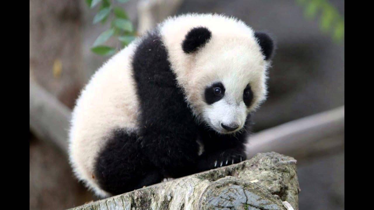 En Peligro De Extinción: TOP 5 Animales En Peligro De Extincion