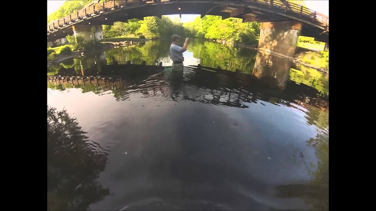 New jersey fly fishing on the ramapo river with for Nj fishing reports freshwater