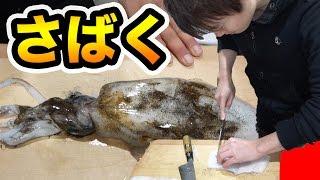 【初】釣ったアオリイカをさばく&調理して食べる!