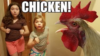Chased By A Chicken! | Babyteeth More