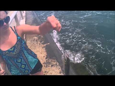 Fishing Ocean City Maryland #1 Huge Bluefish Caught