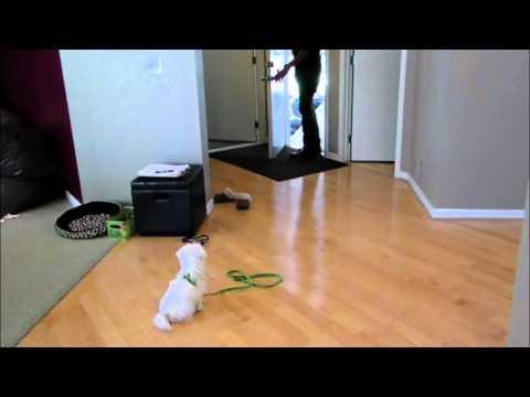 Puppy Separation Anexity - DOG INTERVENTION Dog Whisperer/Interventionist BIG CHUCK MCBRIDE