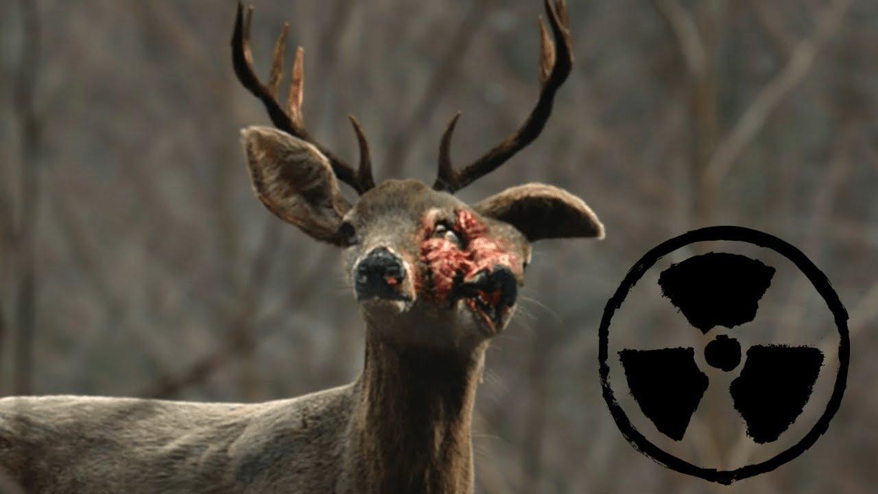 картинки про животных мутантов говнищесравните