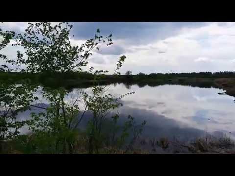 Рыбалка в Пензенской области. Пруд Сухой-2 - YouTube