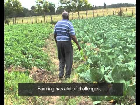 AFCAP: First Mile for Small Holder Kenyan Onion Farmers