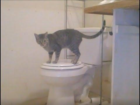 Hazmat To Haven???  Meet My Toilet!!