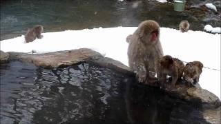 getlinkyoutube.com-Jeux de macaques japonais dans les sources d'eau chaudes