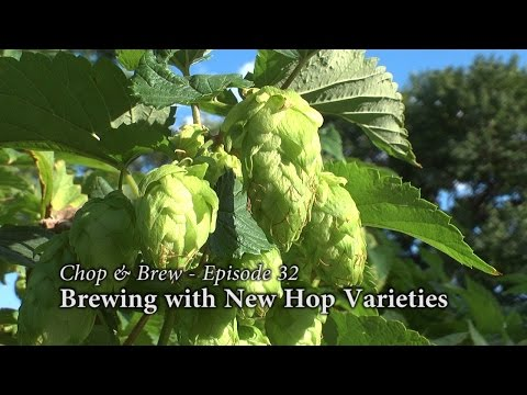Chop & Brew - Episode 32: Brewing with New Hop Varieties