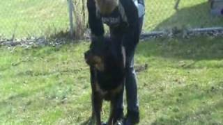 Rottweiler ~ Abused ~ Rescued ~ Looking For Somebody To Love !
