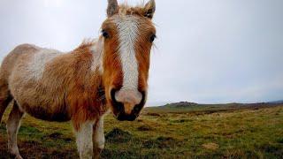Merrivale Prehistoric Settlement | Dartmoor National Park | 4K
