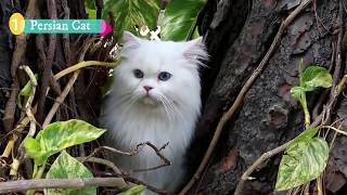 Top 5 Most Intelligent Cats In The World | TopFiveFinder