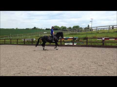 Holly and Jocelyn  Dressage training