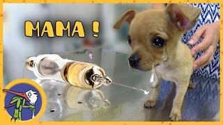 Котенок Печенька и щенок Гаффи снова на прививках. Заехали в зоомагазин