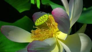 Trance-Meditation für authentische Begegnung und Verführung