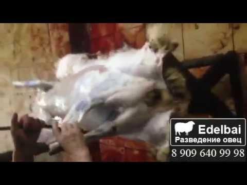 Видео как разделать тушу барана