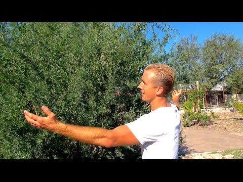 Desert Gardening Ideas