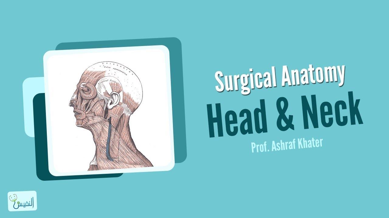 Head and Neck Anatomy - Surgery - Prof. Ashraf Khater - YouTube