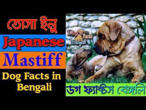 Tosa Inu dog facts in bengali | Japanese Mastiff | Dog Facts Bengali