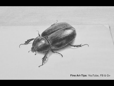 How to Draw a Beetle With Pencil in 3D - Insect