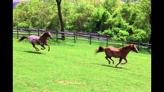 New Jersey Horse Barn / Birthing Stall / Real Estate for sale in New Jersey at 2493 Belvidere RD