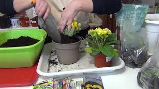 ✅Подготовила стеллаж для рассады✅Высаживаю корни и луковицы в горшки✅Размножение лилий чешуйками