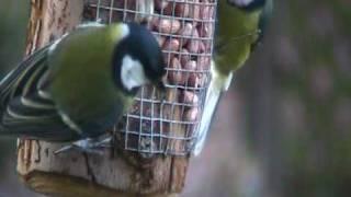 Birds Feeding On Our Peanut Feeder