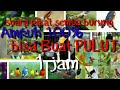 Suara Pikat Burung Cocok Buat Mulut Dijamin Ampuh Ngekek(.mp3 .mp4) Mp3 - Mp4 Download