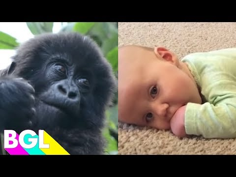 100 Babies and Animals | Try Not To Awww Challenge