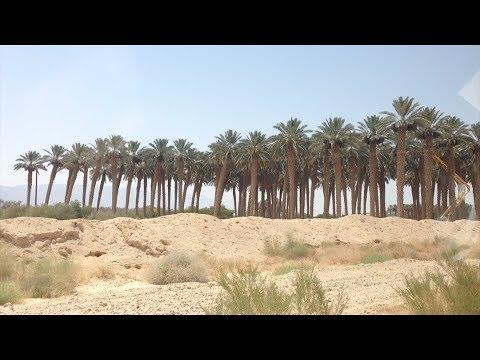 Regenerate Episode 3 - Kibbutz Ketura Arava Institute Desert Farms