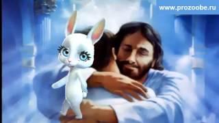 Поздравление на Прощеное воскресенье ✾✾✾ Прошу грехи мне отпустить ✾✾✾ Поздравления от Зайки