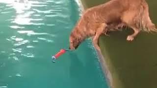Смешные собаки. Собаки падают в воду подборка.