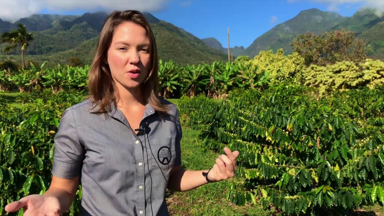 Mill House Roasting - Maui Coffee vs Kona Coffee