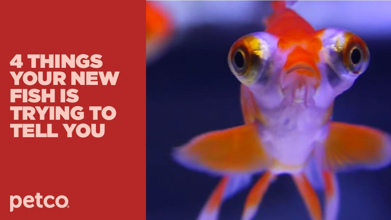 4 things your new fish is trying to tell you new pet tips for Where to buy pet fish