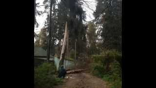 Спил дерева целиком. Dendroplan.ru: 8(925)522-01-44(Профессиональное удаление деревьев целиком и по частям, любой сложности и в любых условиях! Удаление,..., 2015-04-20T14:51:43.000Z)