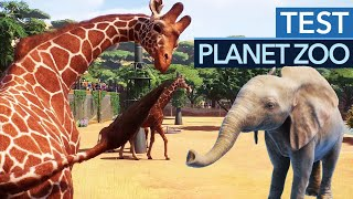 Planet Zoo im Test / Review
