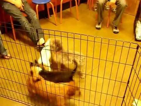 Petsmart Adoption Event. 4/19  Adoptable dogs.