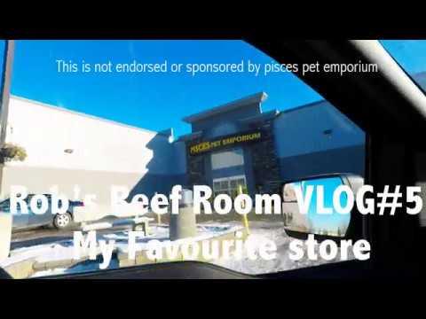 Robs Reef Room VLOG#5  Pisces Pet Emporeum In Calgary