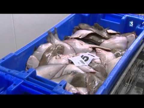Pénurie de poisson à la criée de Royan