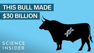 How One Bull Revolutionized The Way We Drink Milk thumbnail