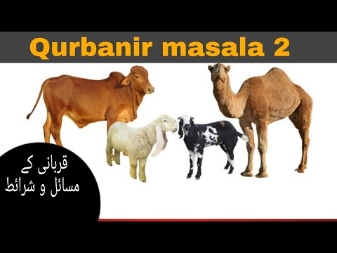 Qurbanir Masala and Sharayet in Rohingya language part 2