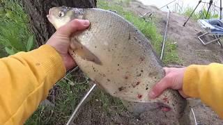 Рыбалка на реке Десна Всего один лещ и сломанный фидер