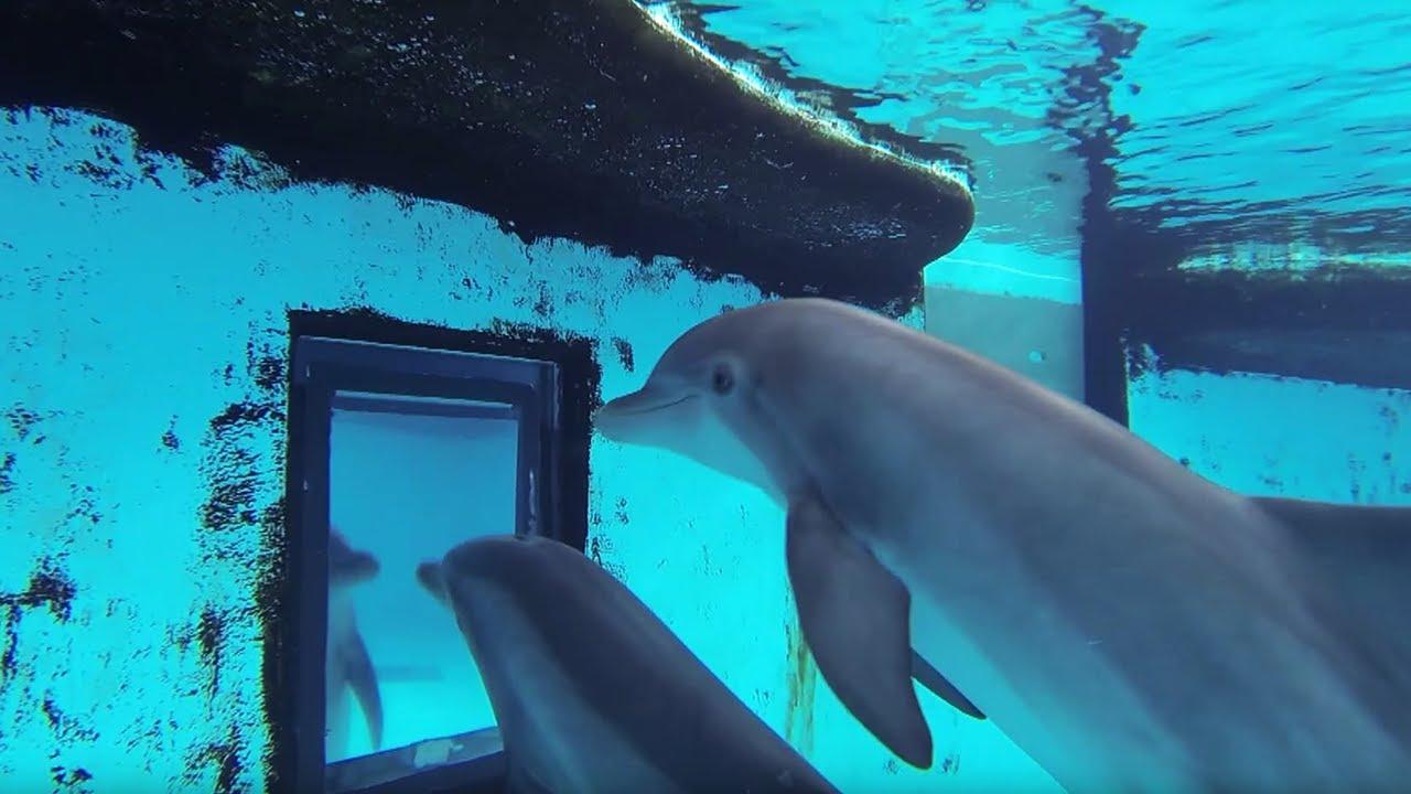 delphin video
