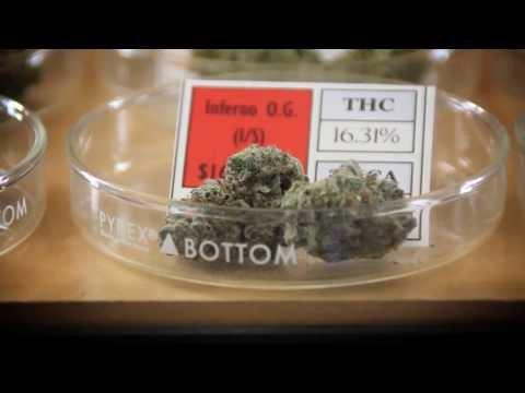 California Marijuana Dispensary Video: Tour Harborside Health Center with founder Steve DeAngelo