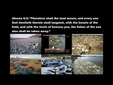 APOCALYPTIC EXTREME MASS FISH ANIMAL SEA LIFE DEATHS of 2011-12