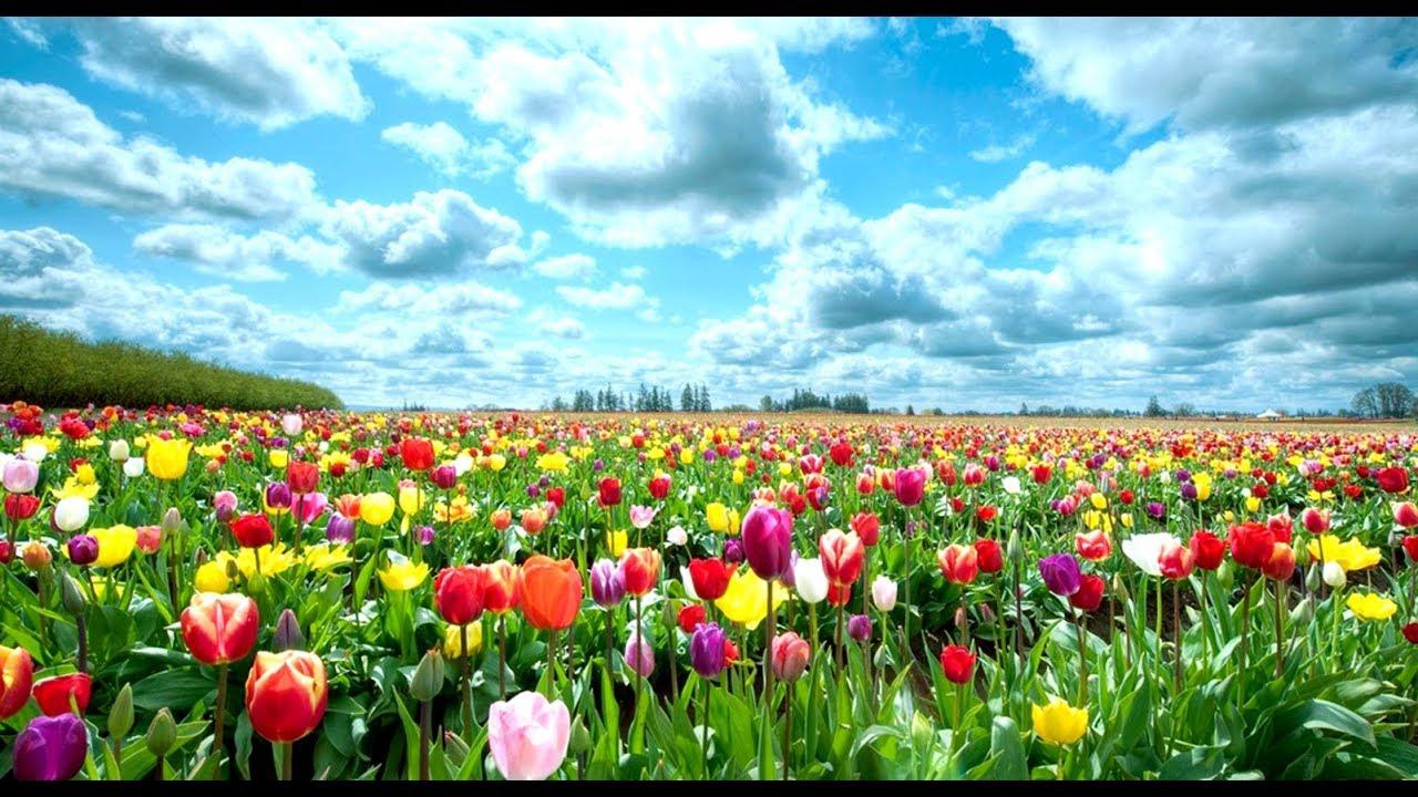 Beautiful Flowers 2018 The Best Flower Garden In The World Youtube