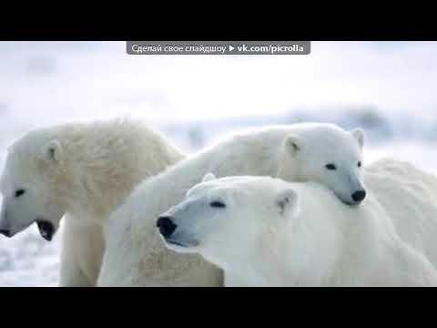 Песня о большой медведице
