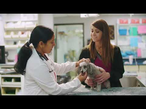 National Veterinary Associates | NVA